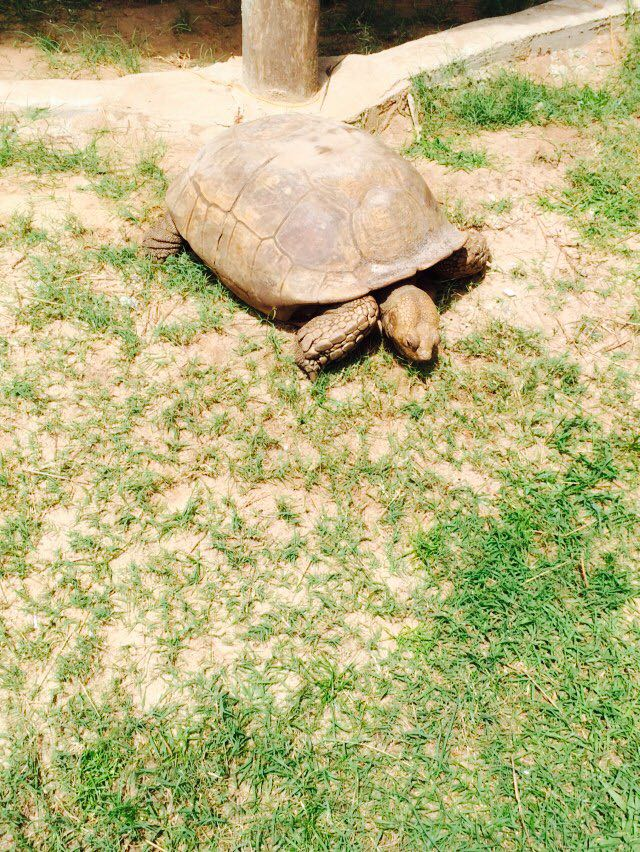 Tortoise at the Lekki conservation centre